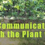 Communication with the Plant World